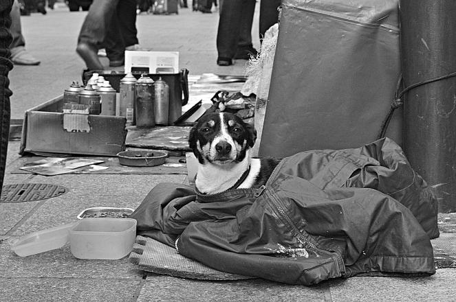 Oihana-Street Dog