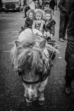 Tom-The Pony and Cart BW